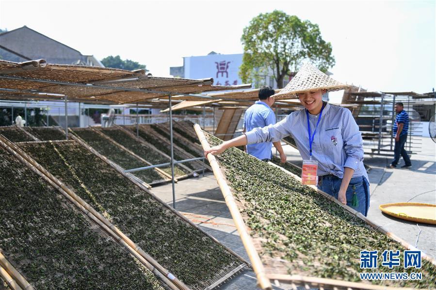 (社会)(4)福建福鼎:制茶能手比拼技艺