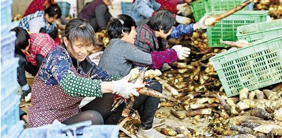 杭州做大乡村旅游富农惠民将美丽生态化为美丽经济