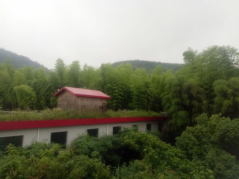绿色矿山植被郁郁葱葱.jpg