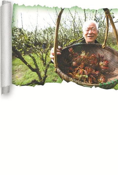 走进春天的田野 听一听有关野菜的故事