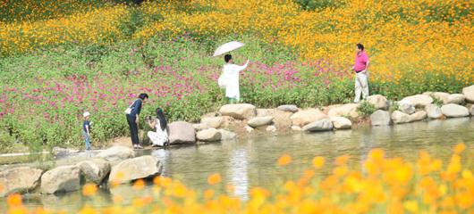 远离热闹景区 去杭州郊区看花海