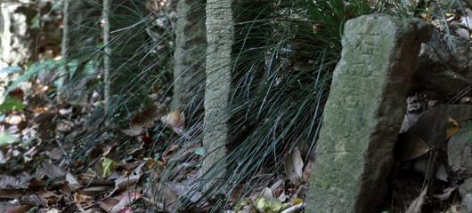 西湖荒山现石碑群
