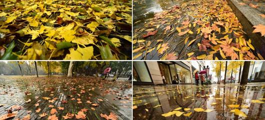 秋雨绵绵 落叶成景