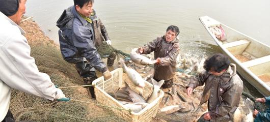 建德:渔业转型促治水 人欢鱼跃助增收