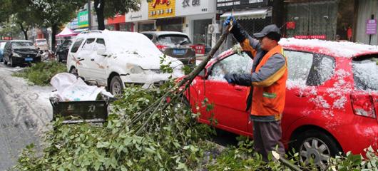 行道树枝被雪压断 环卫工人及时清理保畅通