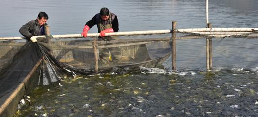 建德:增殖放流鱼苗 助力渔民增收