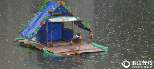 杭州大伯自建爱心屋为鸭子遮风挡雨