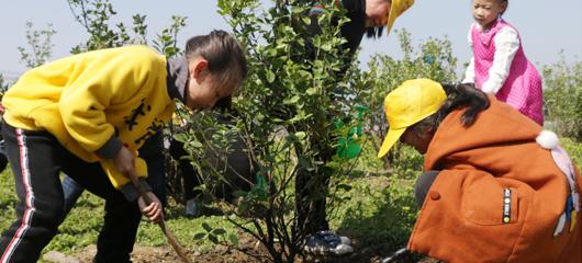 桐庐:爱护树木 从小做起
