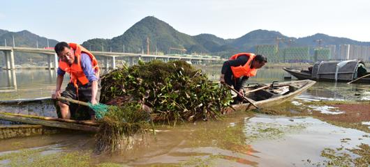 建德:清水草 护水质