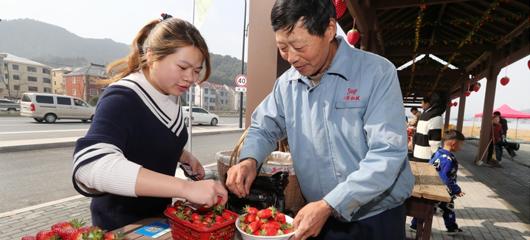 富阳建设草莓长廊 倡导莓农集中销售