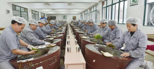 56台炒茶机同时开启炒制西湖龙井