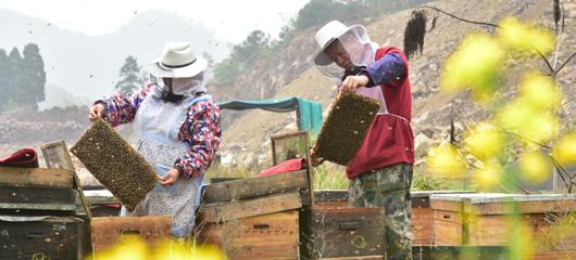 建德:田园放蜂群 农家增收路