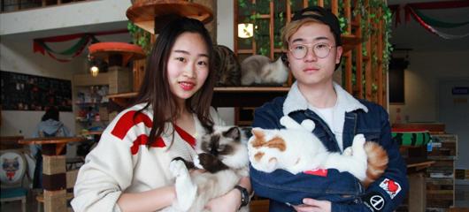"""杭州大二学生创业当老板 找了10多只猫当""""员工"""""""