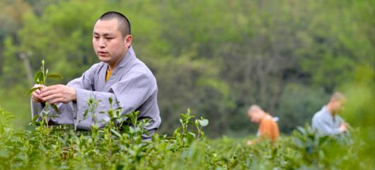 2018杭州禅茶开茶节开幕