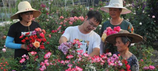 临安:美丽花卉网上卖