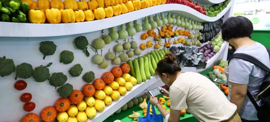 浙江种博会看点多 瓜菜新品新型农机齐展示