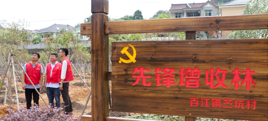 桐庐:先锋增收林 党员来认养