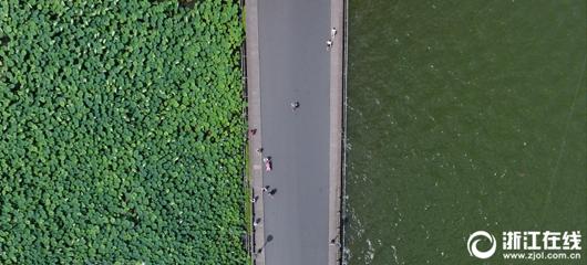 俯瞰西湖美景:一半碧荷一半绿水