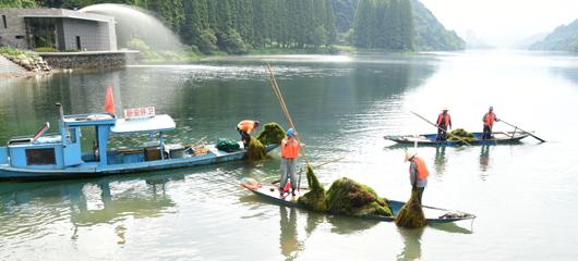 建德:清除水草 护江保洁