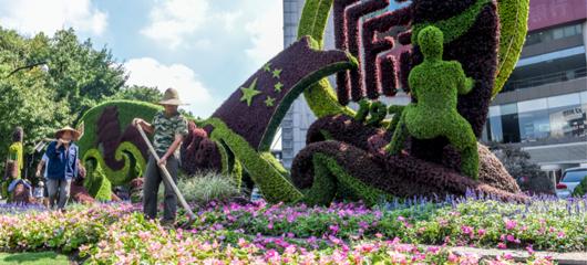 佳节临近 杭州街头花团锦簇喜气洋洋
