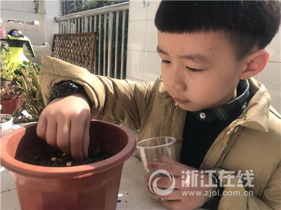 行知金陶幼儿园孩子们把出芽的豆豆一颗颗小心翼翼的铺在泥土上。.jpg
