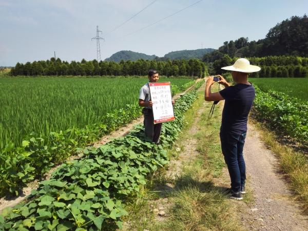 注意!7月下旬水稻陆续进入拔节期,除草剂风险更大!