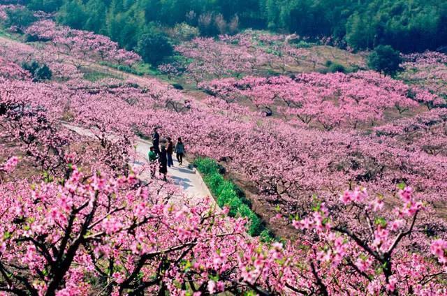 奉化赏桃花攻略:赏花景点、交通管制、公交专线等全在这儿