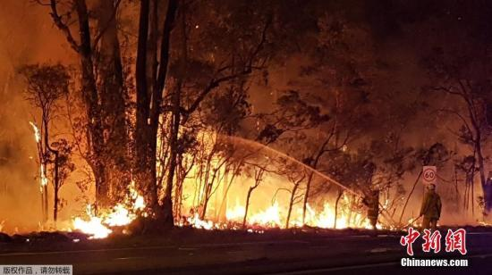 """据悉尼西南部居民称,虽然山火来势汹汹,但目前还没有人员伤亡的情况,也没有民居遭到破坏,可谓""""神奇""""。图为消防员正在灭火。"""