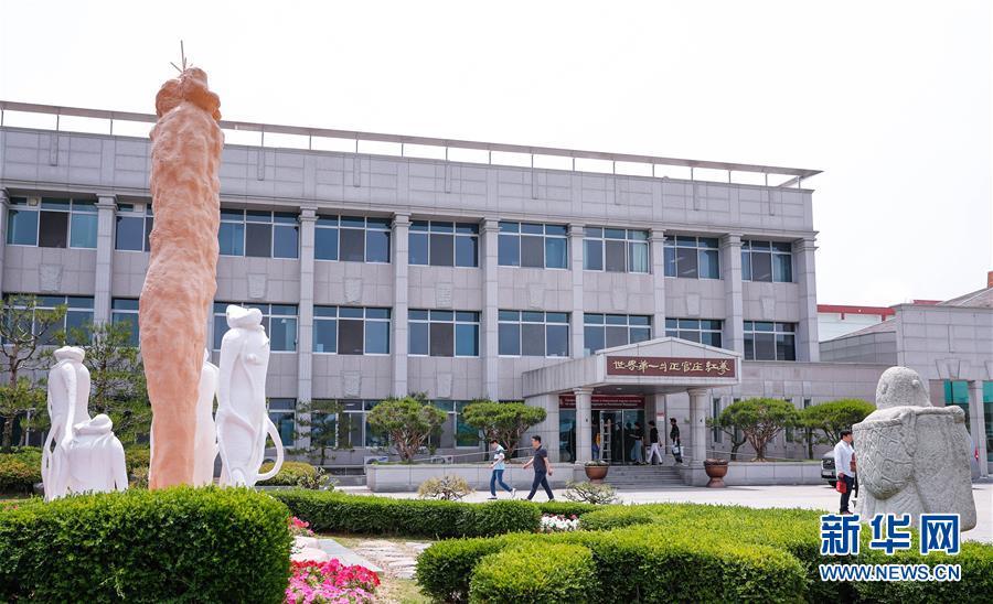 探访韩国高丽参工厂