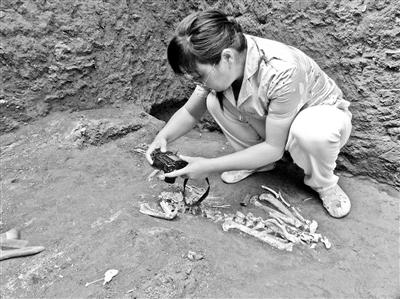 必赢彩票手机版:2200年前古墓现已灭绝长臂猿遗骸
