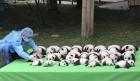 """大熊猫直播成""""网红""""受热捧 如何平衡消费需求和自然保护"""