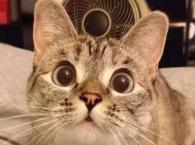 """""""吸""""猫成瘾 猫经济崛起竟能拉动GDP"""