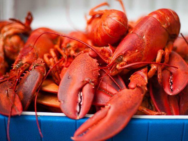 中国吃货太给力!一年吃掉772万公斤美国龙虾