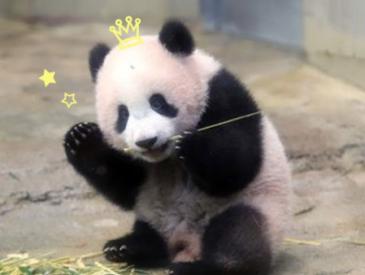 """熊猫""""香香""""还是外交官""""杉山""""?日式英语逗笑严肃华春莹"""