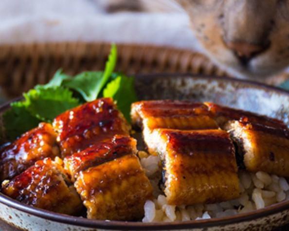 吃不到鳗鱼饭了? 日本鳗遭遇严重鱼荒捕获量创历史新低