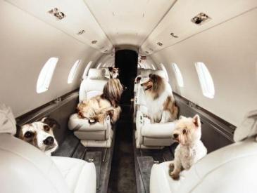 宠物可以坐飞机了!收费800元每只 3月还将推出宠物机票