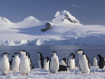 """五福火到了南极 近千中国人将在这""""世界最贵""""景区过年"""