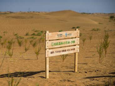 """植树节北京网络捐款60元可""""种树"""" 蚂蚁森林投5亿支持绿色发展"""