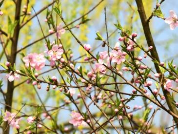 """天气渐暖 多地提前入春 如何打开""""春捂""""的正确方式?"""