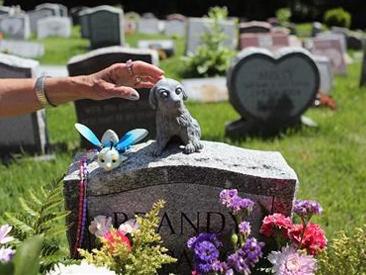 宠物殡葬行业问题多缺监管 你会花钱为爱犬举办葬礼吗?