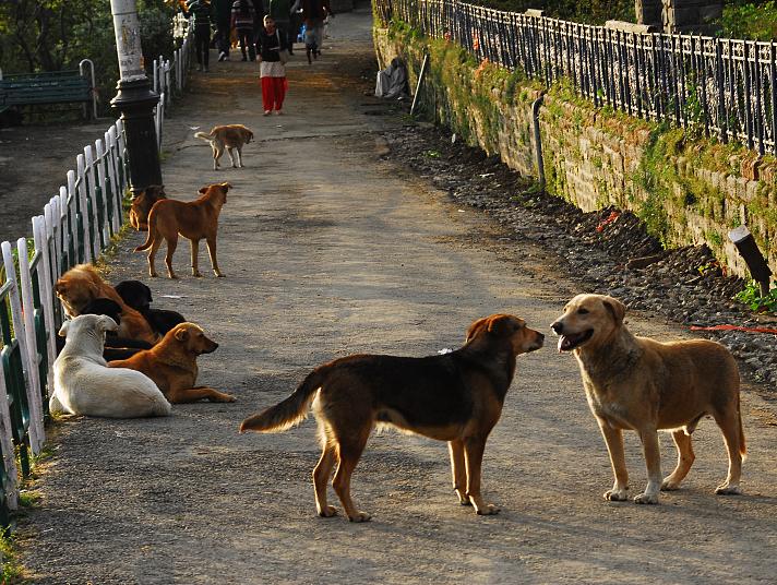流浪犬咬人事件频发 专家称养犬人违法弃养须受严惩