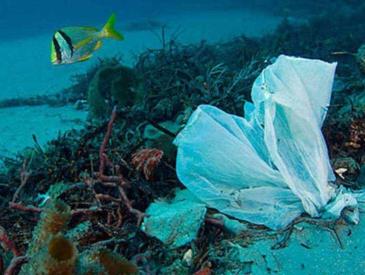 """外卖叫多了,""""限塑令""""尴尬了 三大外卖平台一年至少消耗73亿个塑料袋"""