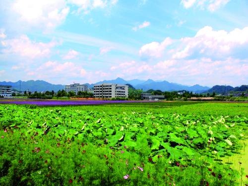 水南畈花海景观.jpg