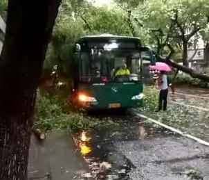 """杭州10米高大树被风吹倒,压住公交车!""""摩羯""""刚走,又有两个新台风要来啦"""