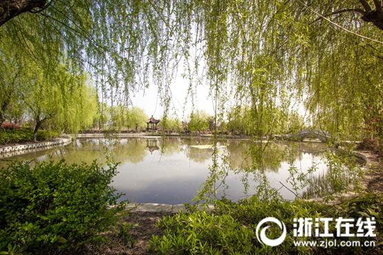 乡村音符奏响视频v乡村最强音这届浙江省生态的小学生态加减法图片