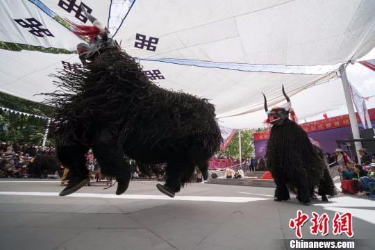 图为古老的野牦牛舞《协荣仲孜》参加藏戏表演。 何蓬磊 摄