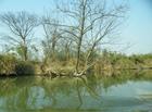 冬日的西溪湿地