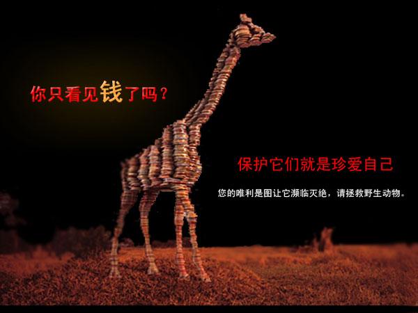 保护野生动物图片