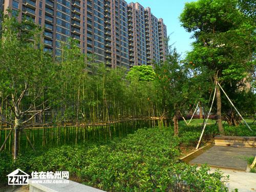 步开始做绿化,重点打造的是中央 九月是丰收的季节,为了和硕果累