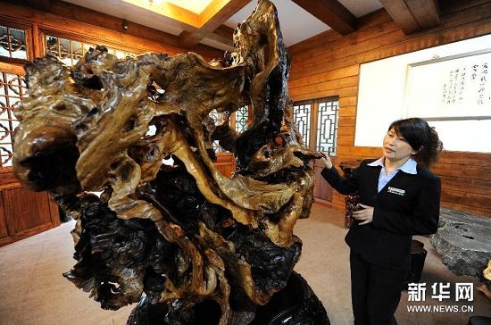 徐谷青和他的根雕艺术醉根艺品有限公司的一位工作人员...
